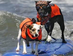 surfingdogs.jpg
